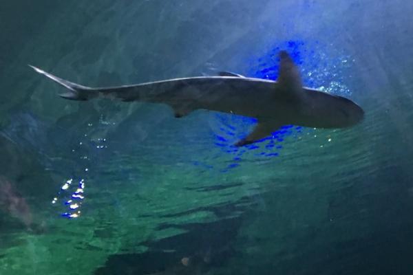 living_planet_shark