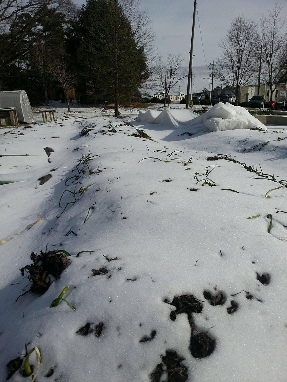 Snow 4.jpg