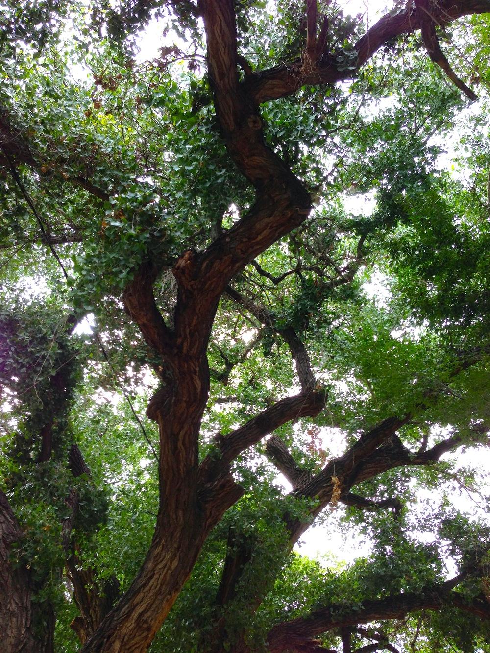 EH_NM_Tree.JPG