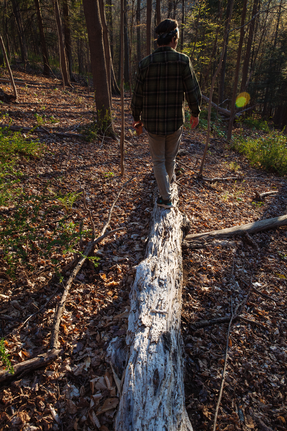 A hike along tree trunks through the Delaware Water Gap forest in New Jersey.