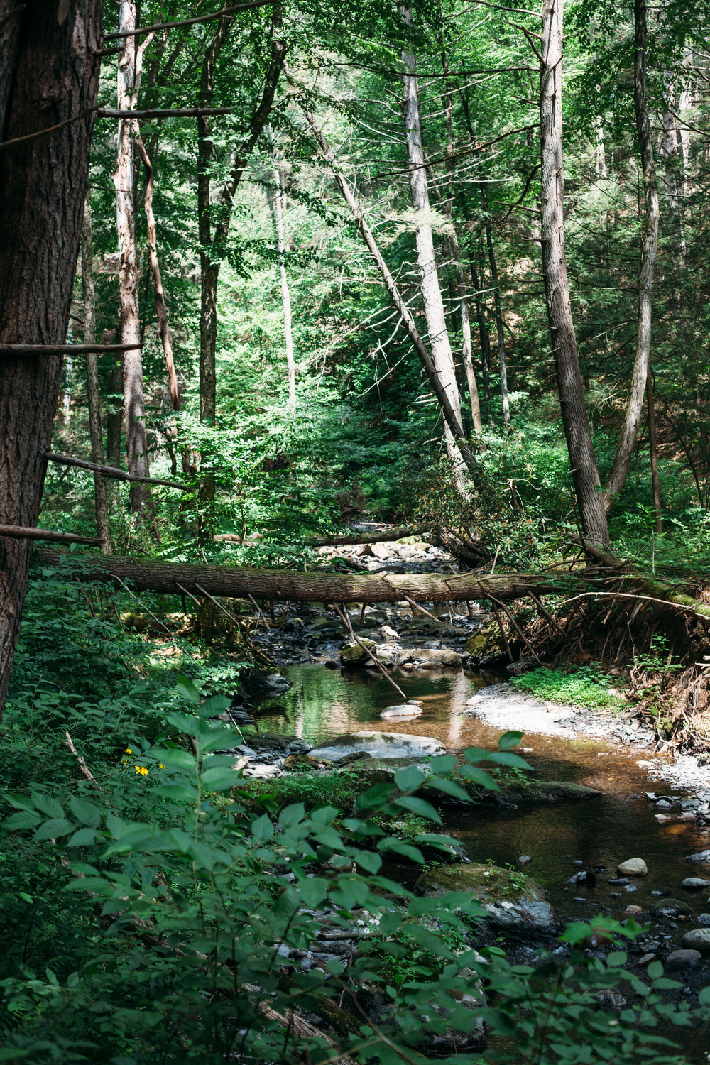 A summer hike along Adams Creek Trail in Pennsylvania.