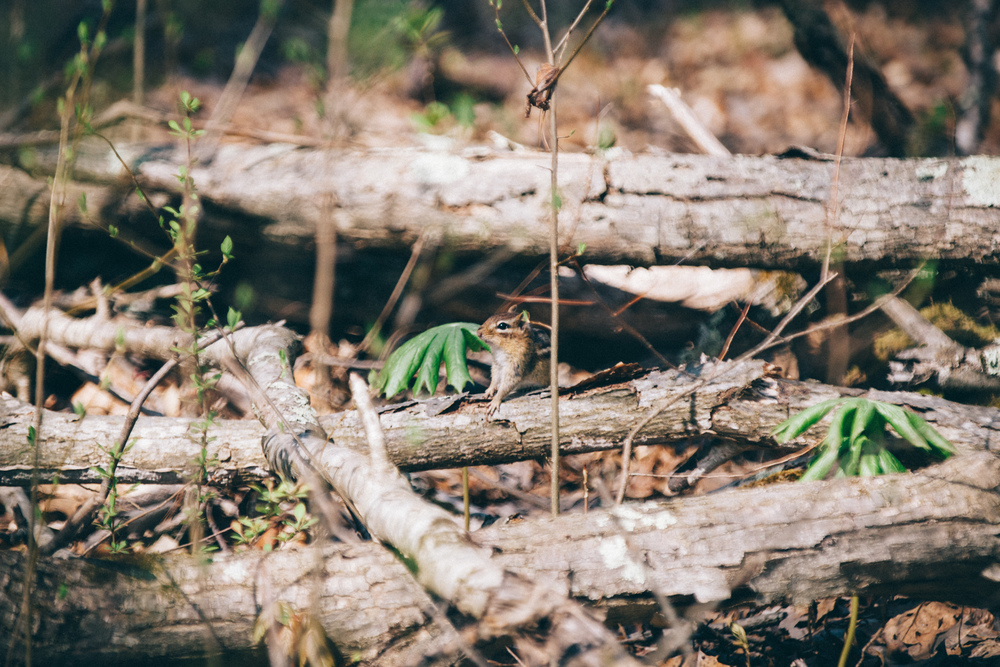 Animals of all sizes can be found in the Delaware Water Gap, such as chipmunks