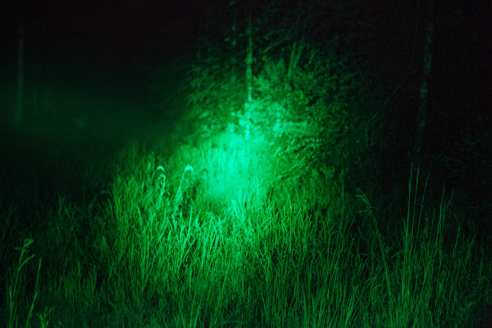 Using a green mounted hunting light in search of feral wild pigs in Lumber River, North Carolina.