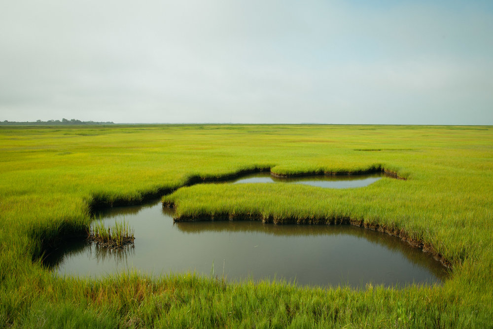 The long endless view of the New Jersey marshlands near Ocean City.