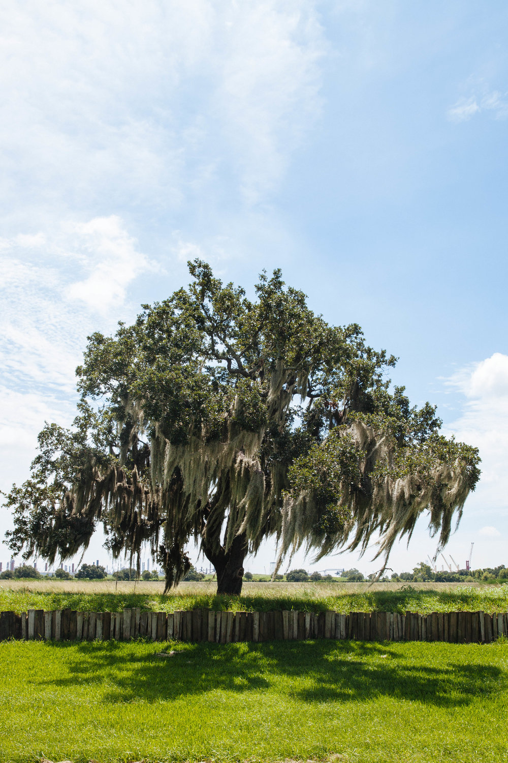 Spanish moss covers a tree at the Jean Lafitte National Park in Louisiana.