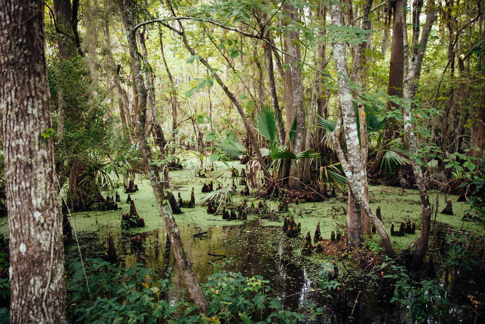 The bayou in Jean Lafitte National Park in Louisiana.