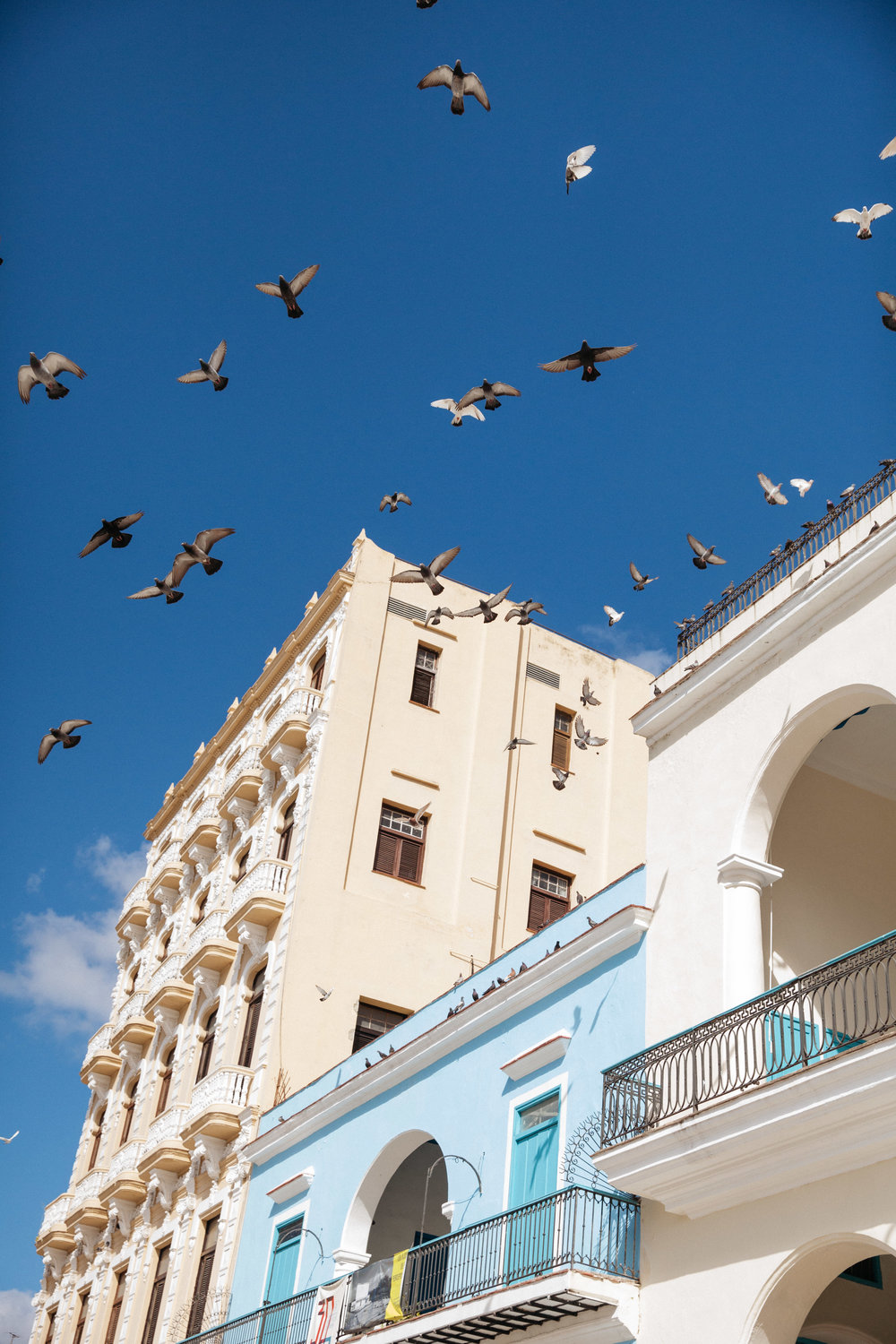 Pigeons fly over the Plaza Vieja on a sunny day in Havana, Cuba.