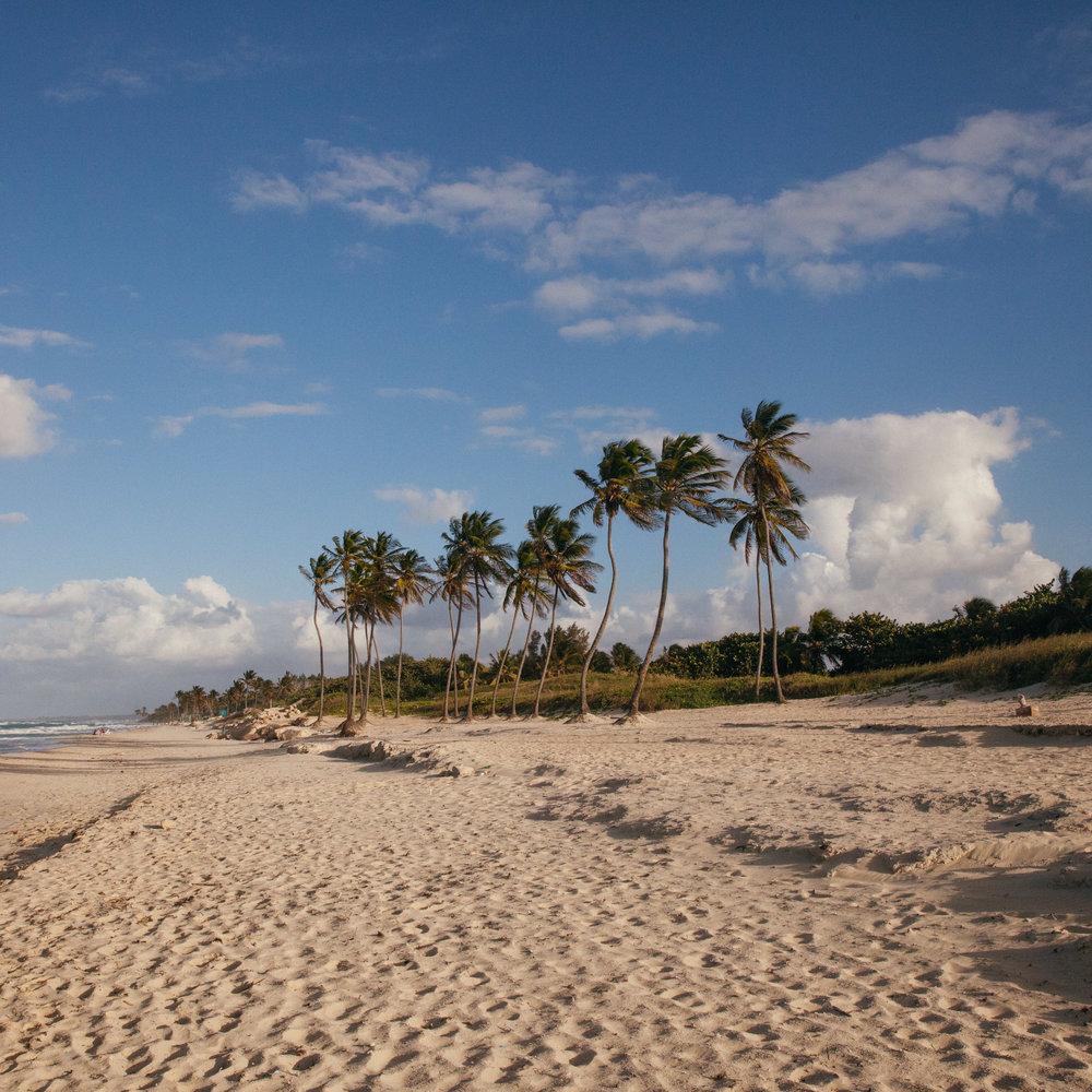 Palm trees line the beaches outside of Havana, Cuba.