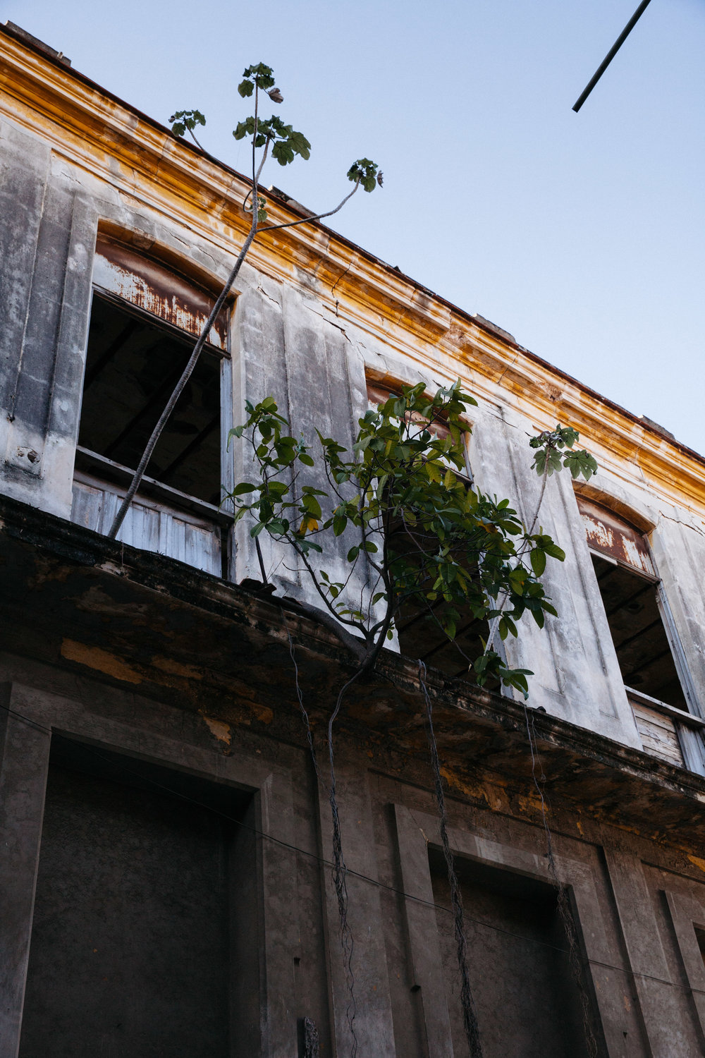 Plants grow out of abandoned buildings in Havana, Cuba.