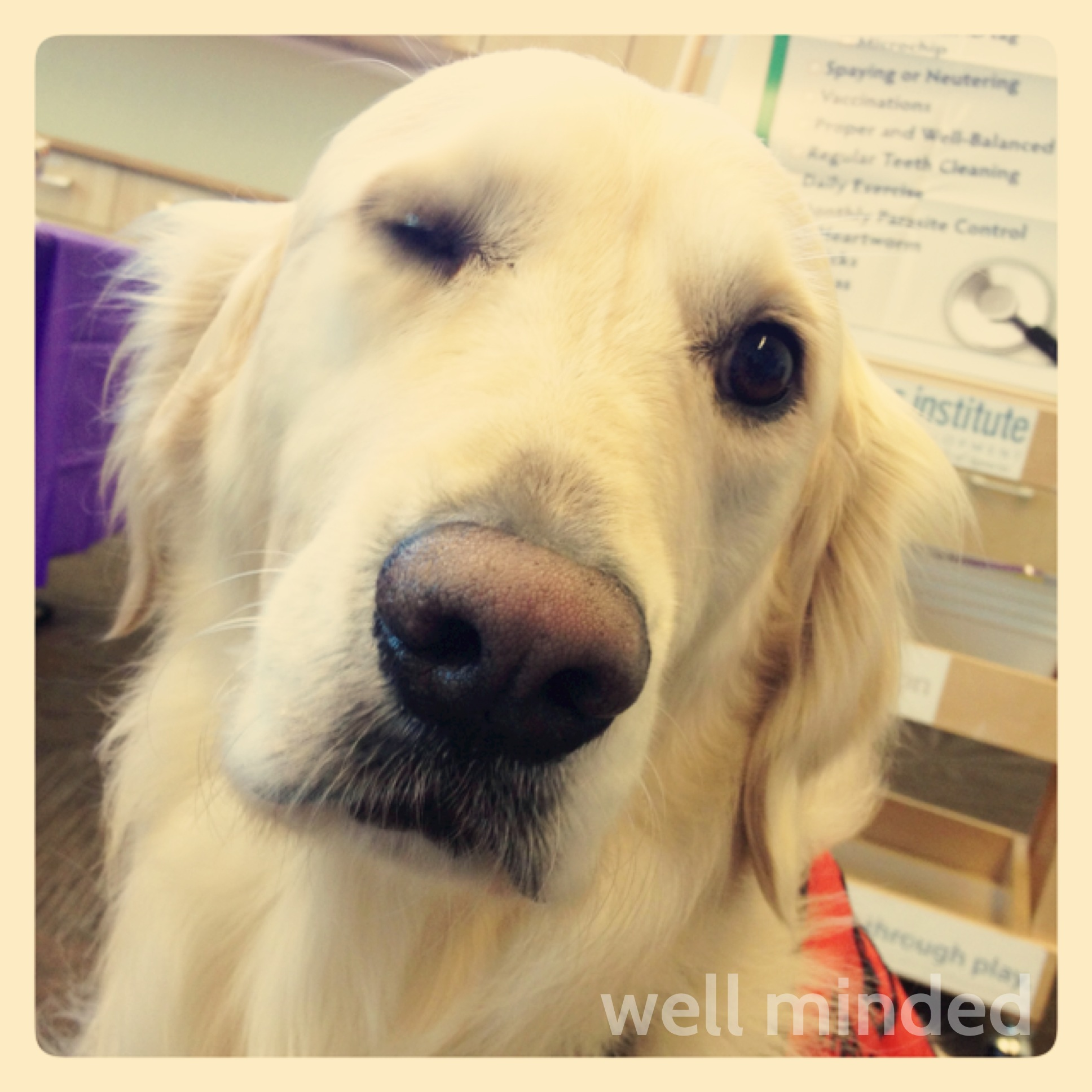 Wordless Wednesday: Benson Winks