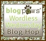 BlogPawsWedButton.jpg