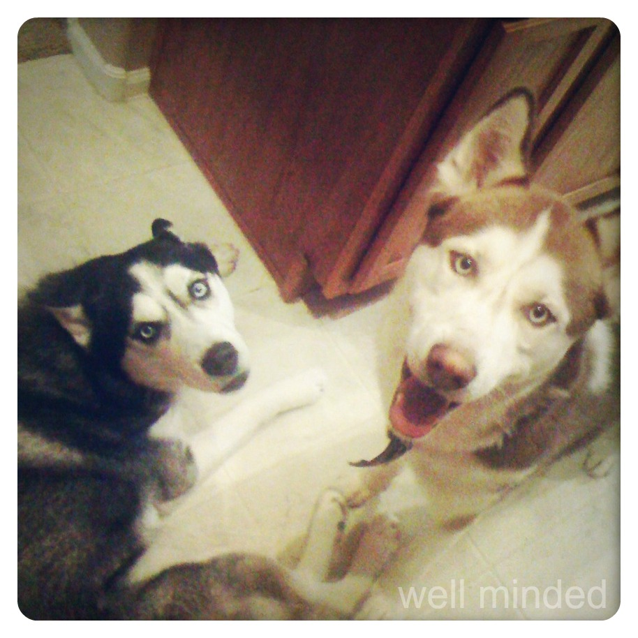 HappyHuskies.jpg