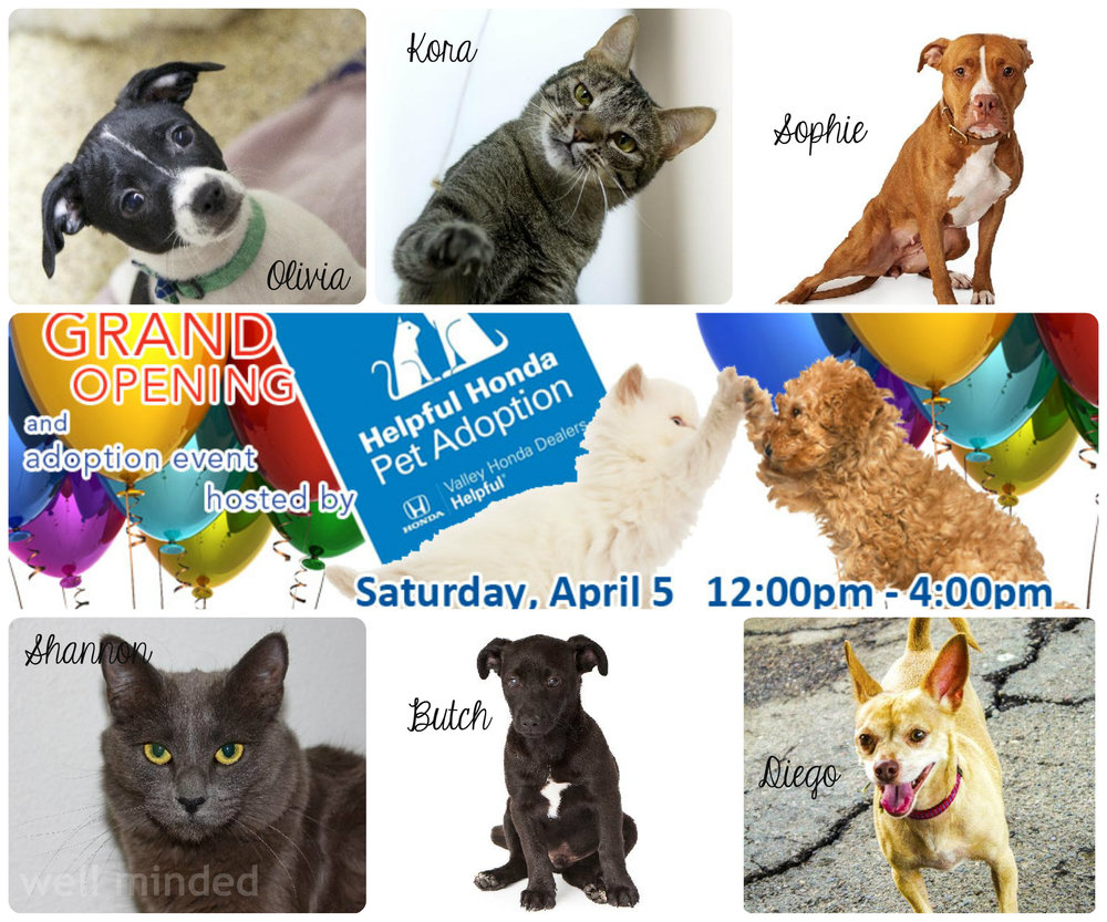 Lost Our Home is doing great things. The animals pictured here are a fraction of those who found forever homes in March.