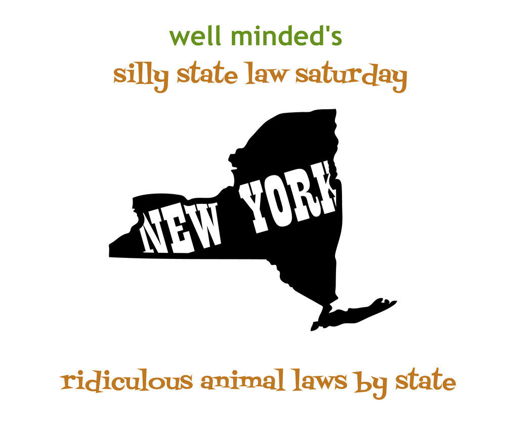 silly state law saturday: new york. state image source: eyecandydecals.com