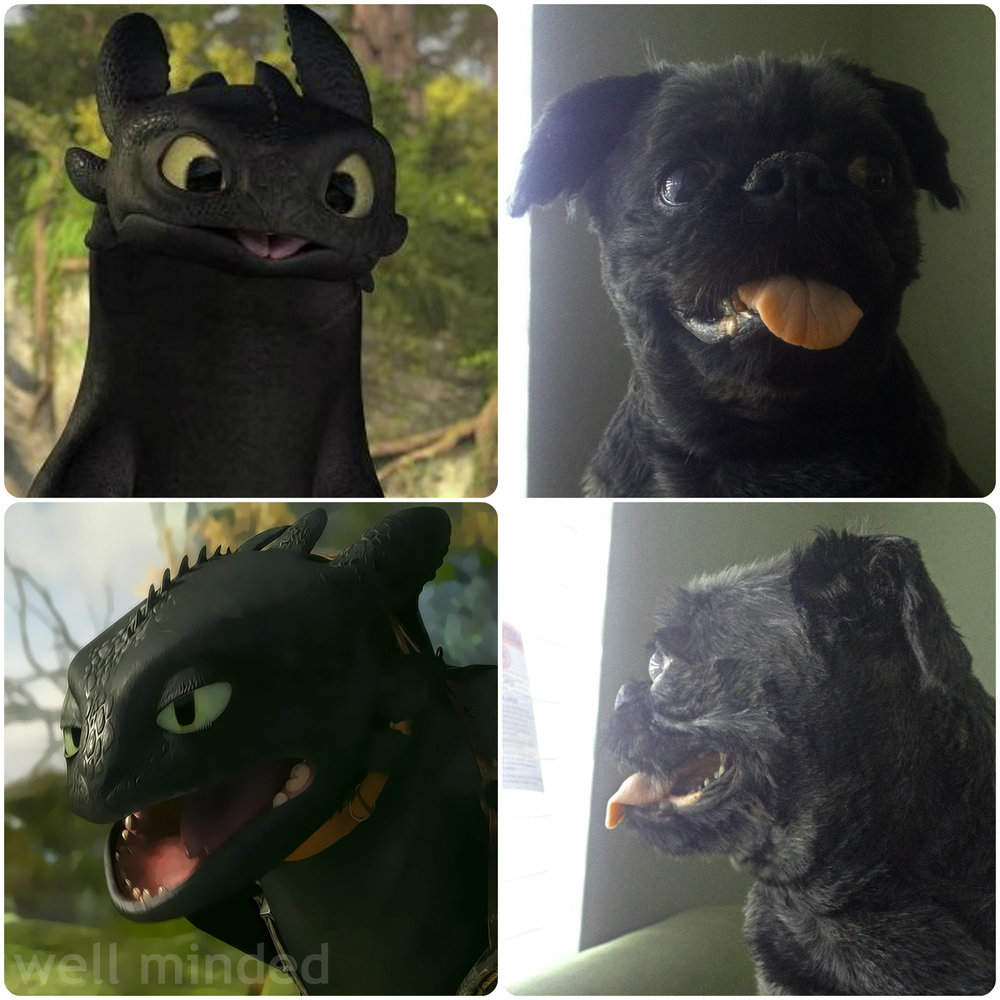 My dogphew looks just like Toothless the Dragon, don't you think?