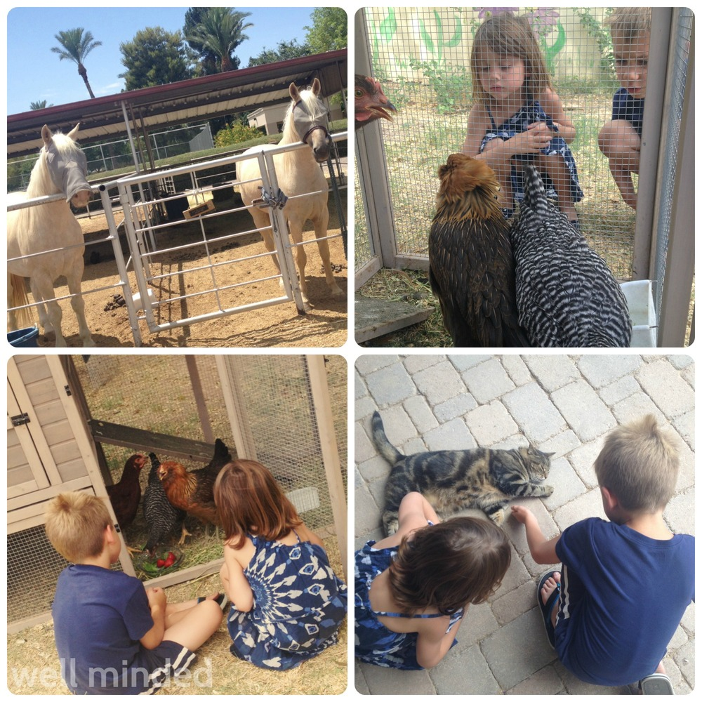 Admiring the horses, chatting with the chickens and giving the cat some love.