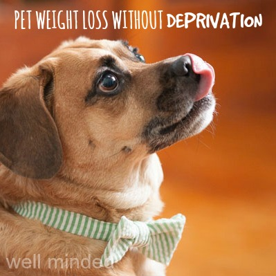 pet weight loss without deprivation: theo's success with #HillsPet. Photo credit: Alice G. Patterson Photography via Daily Dog Tag