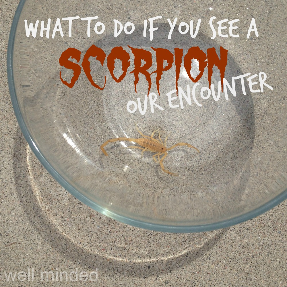 What To Do If You See A Scorpion Our Encounter Well Minded Pets