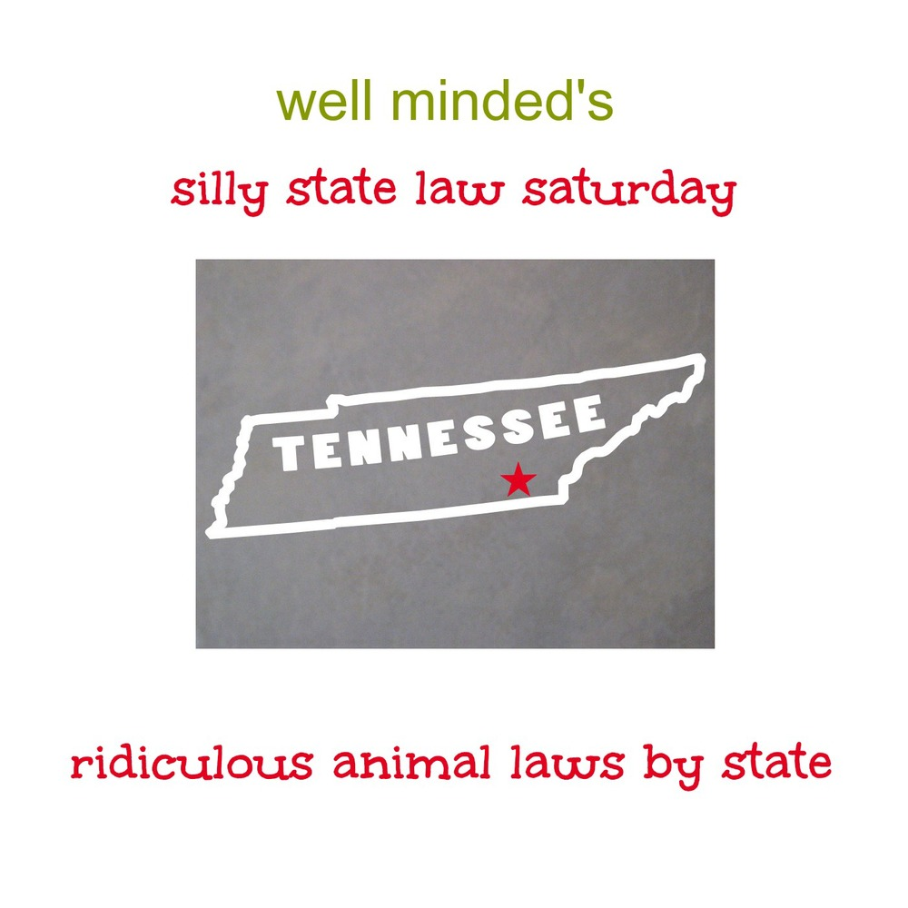 well minded's silly state law saturday: tennessee. state photo source: shop.sdsticker.com