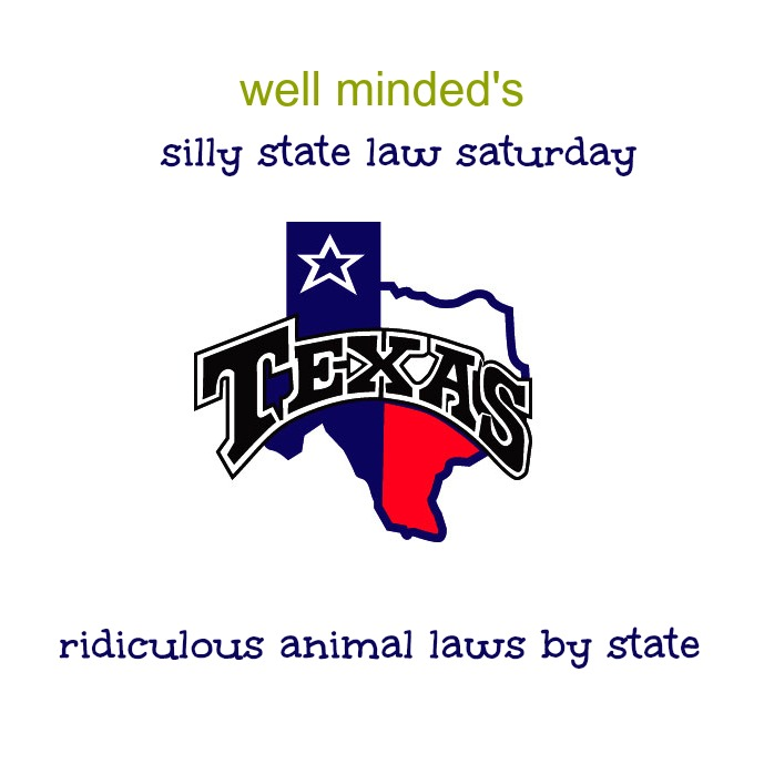 well minded's silly state law saturday: texas. state photo source: longviewtournaments.com