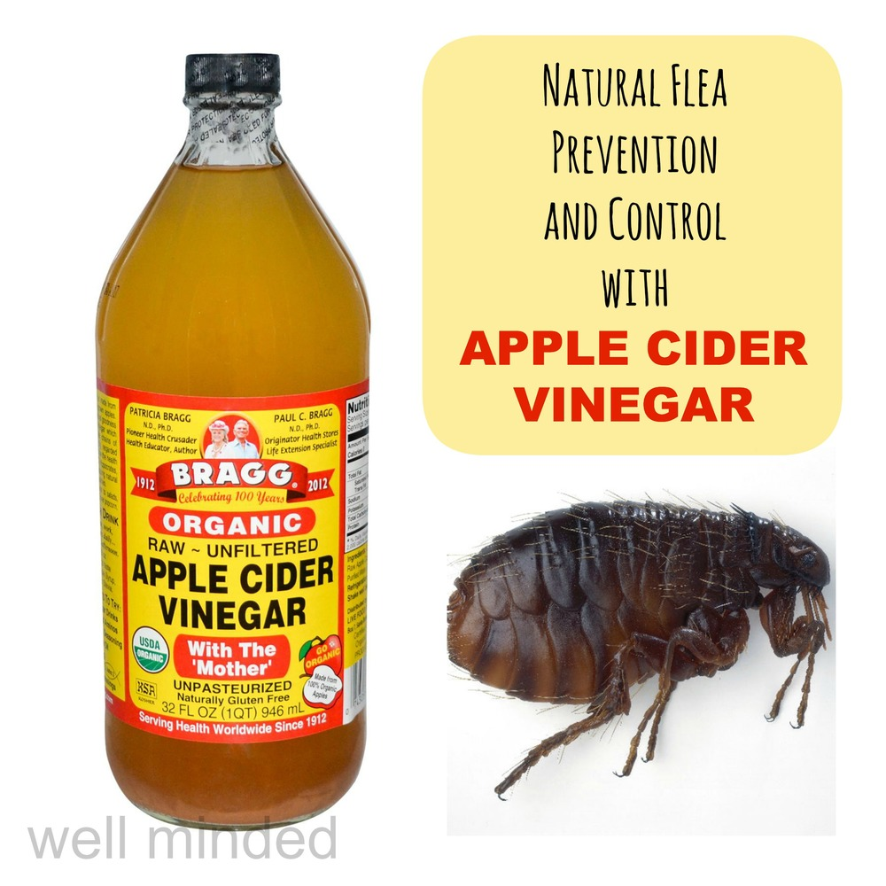 Natural flea prevention and control with apple cider vinegar. ACV image source: bragg.com. Flea image source: wkanimalhospital.com.