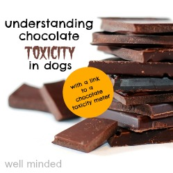 chocolate toxicity dogs