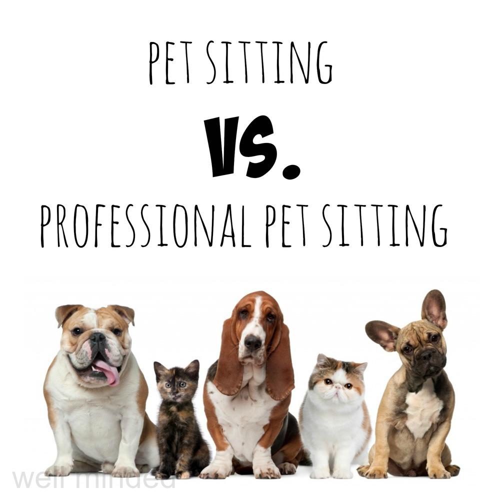 Pet sitting vs professional pet sitting well minded pets for Babysitter dog sitter