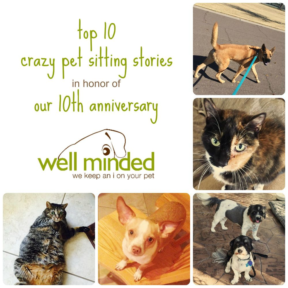 Top 10 Crazy Pet Sitting Stories in Honor of our 10th Anniversary.