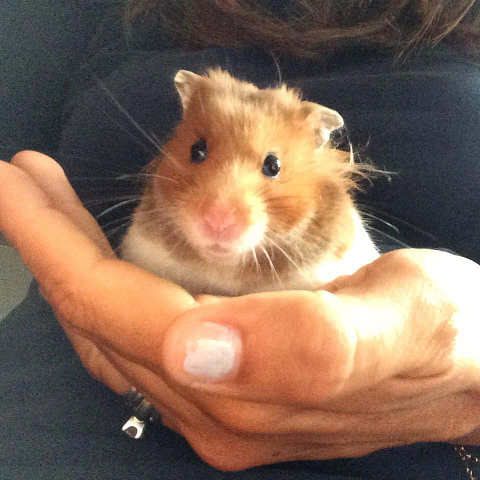 Do you think a hamster would make a good pet for your child?