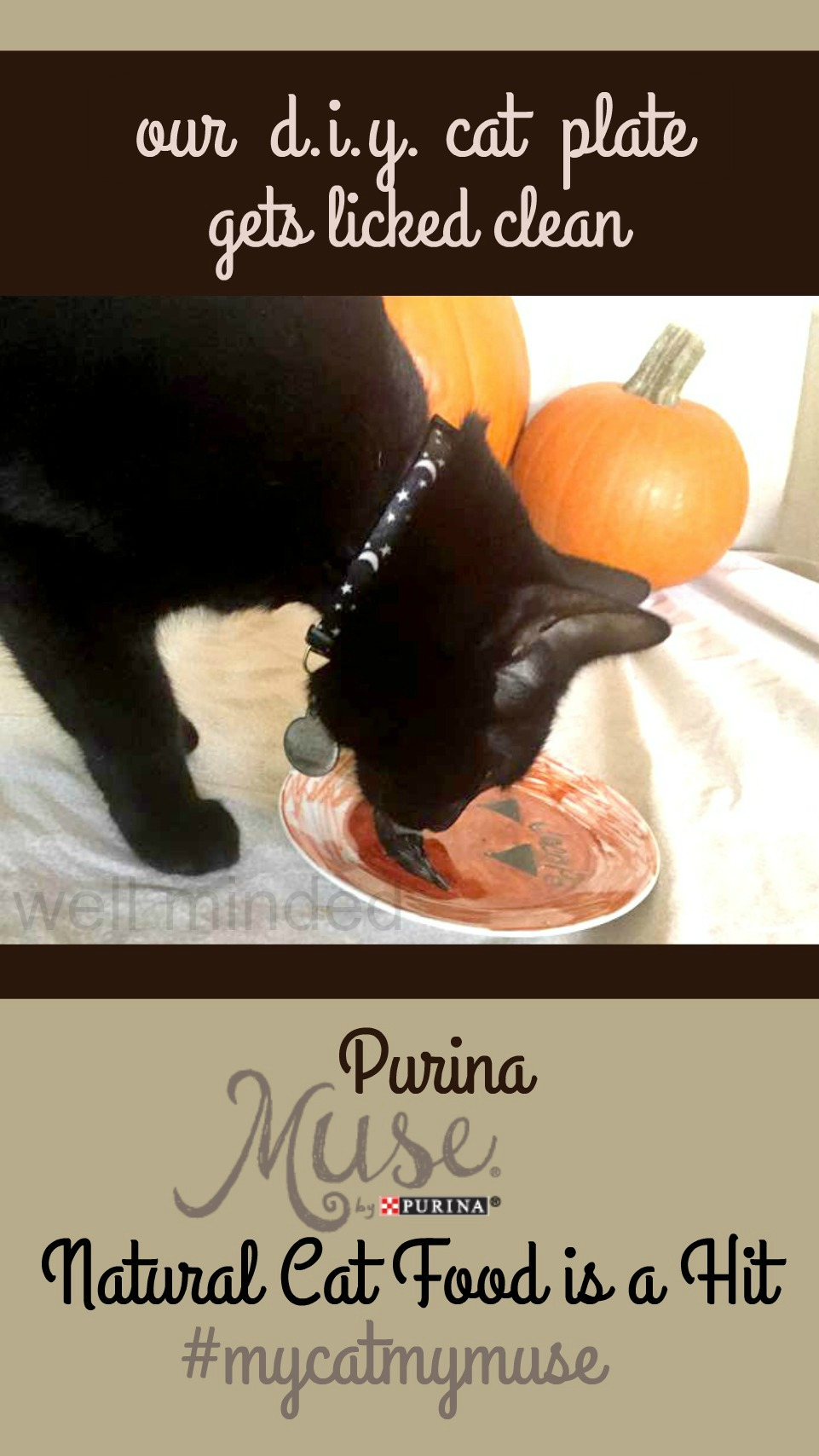 Our DIY Cat Plate Gets Licked Clean: Purina Muse® Natural Cat Food is a Hit. #MyCatMyMuse wellmindedpets.com