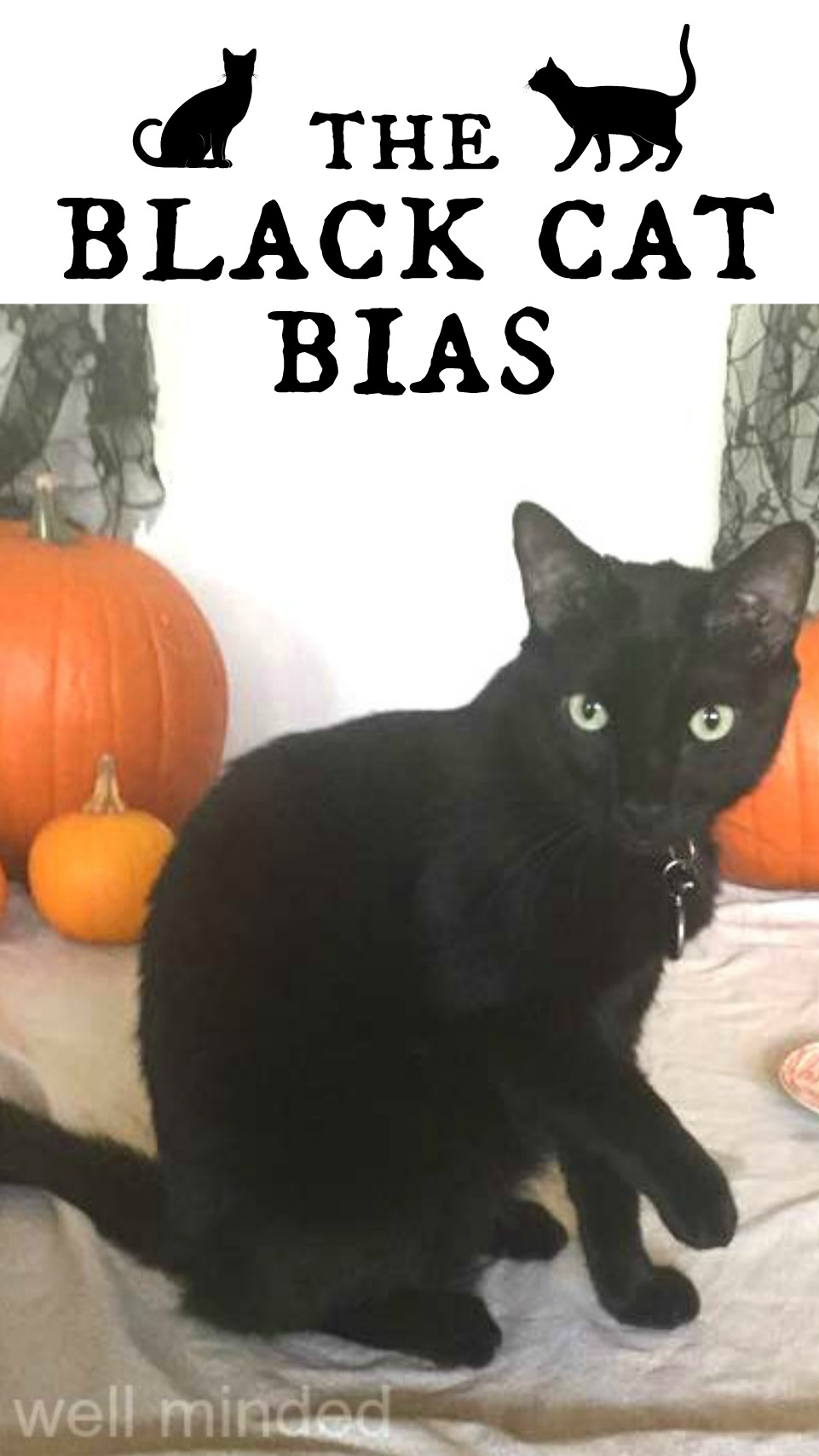 Do cats bring bad luck? And are they really the last to be adopted? The Black Cat Bias. wellmindedpets.com