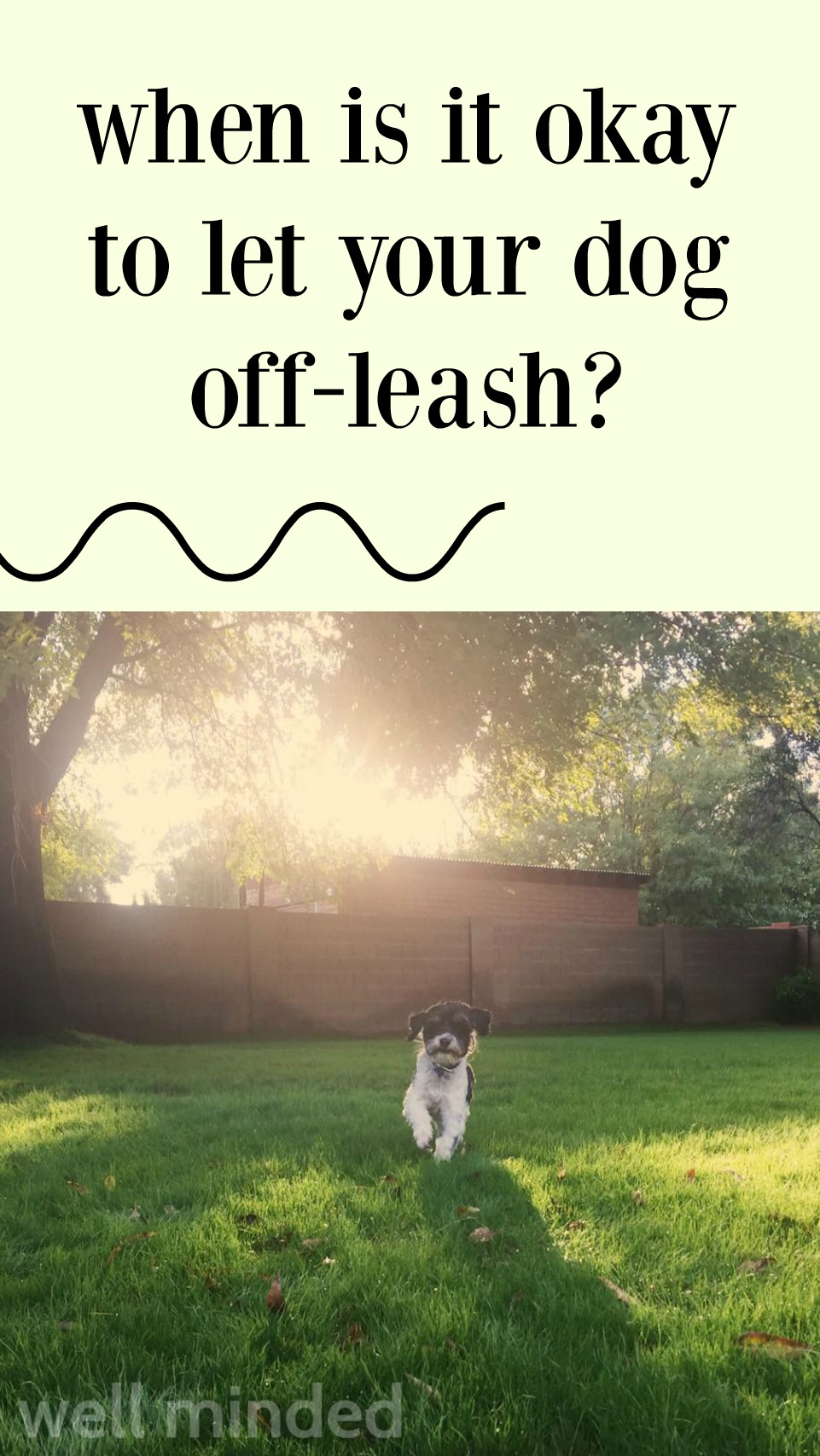 When is it okay to let your dog off-leash? wellmindedpets.com