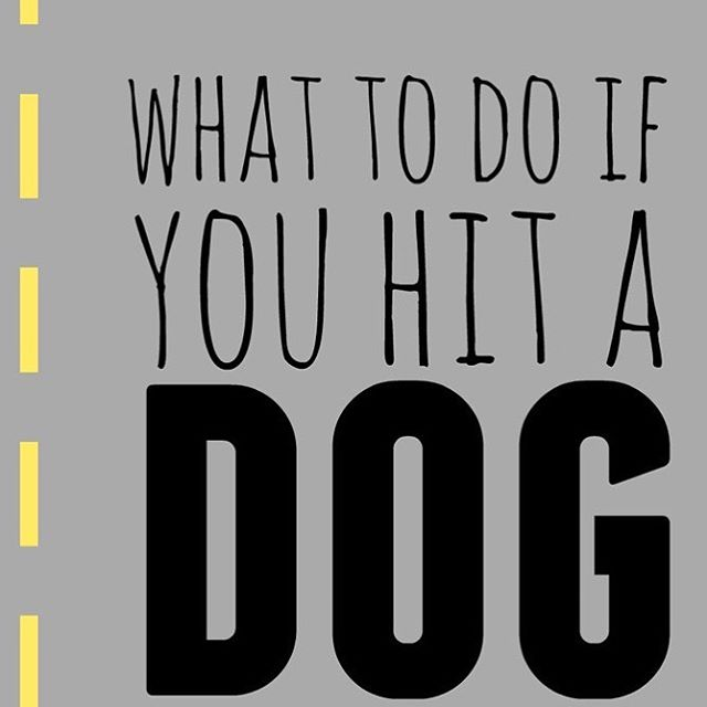 Would you know what to do if you hit a dog with your car? We're talking about that #ontheblog #dog #safety