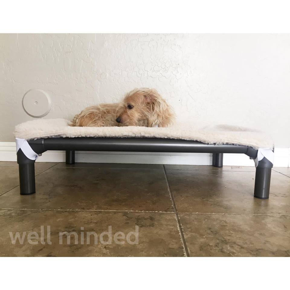N.A.S.H.A. loves her Kuranda Dog Bed!