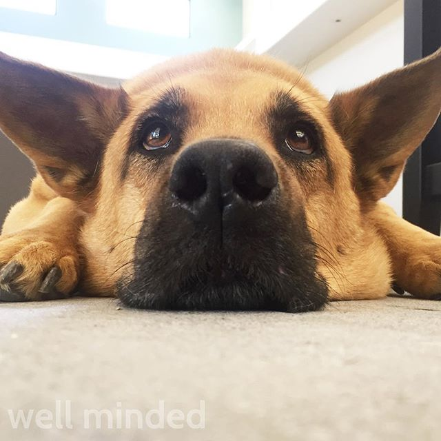 I love this guy like crazy. 💗 #petsitting #dog