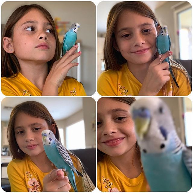Even a bird has to work on his selfie game. #mangotheparakeet #parakeet #selfie