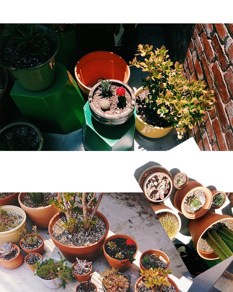 cacti3.jpg