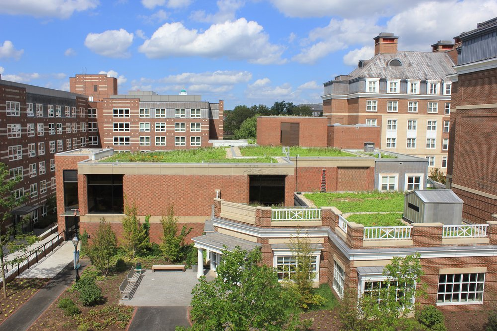 Photo courtesy of Recover Green Roofs