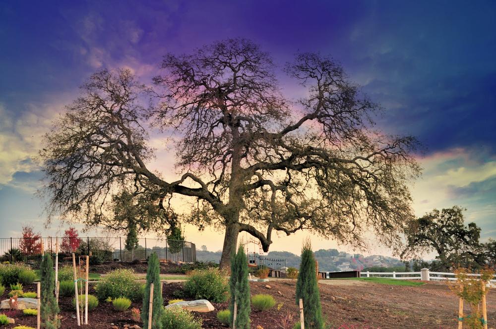 edit back yard oak Mansion photo shoot (270)_edit.jpg