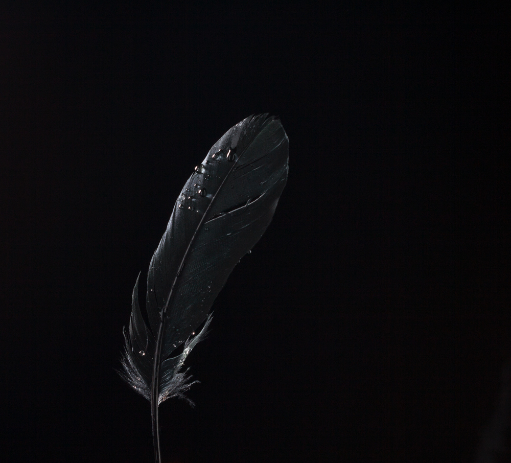 feather.jpg