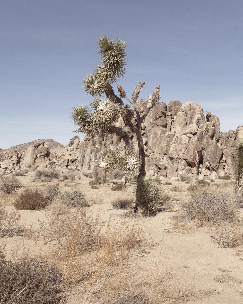 desert2-6291.jpg