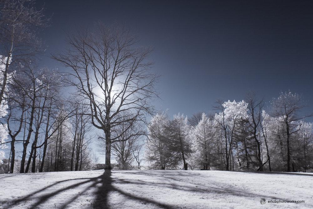 blackwater_falls_tree_ir_ericbphotoworks.jpg