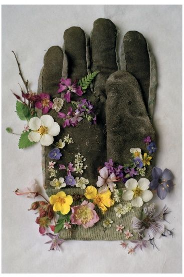 chasingthegreenfaerie: (via (77) Pin by Stephanie on Green | Pinterest | Tim Walker, Gloves and Gardening)