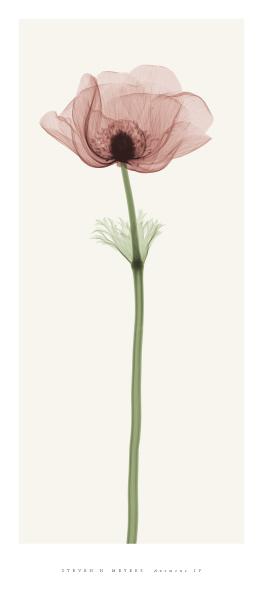 ave-de-paso-en-vidas-ajenas :       Steven Meyers xray photography of flowers