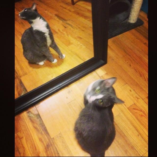 Someone got caught admiring himself in the mirror. #catsofinstagram