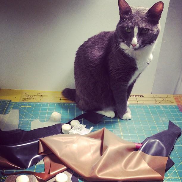 Someone is helping me work. #catsofinstagram #kittyhelper #meow #workinglate