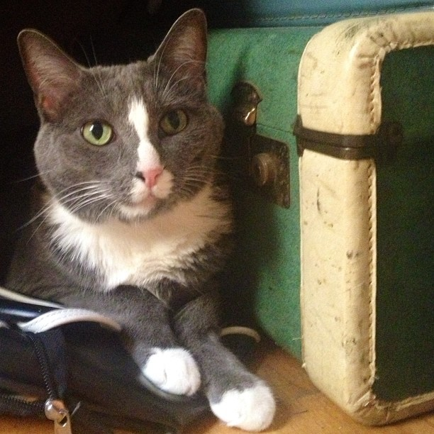 My boy can be #handsome sometimes. #catsofinstagram #cat #vintagesuitcase