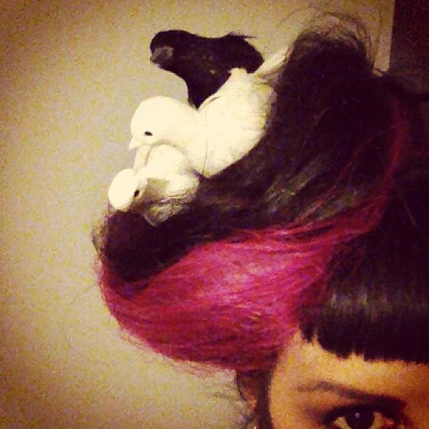 Hair nest.