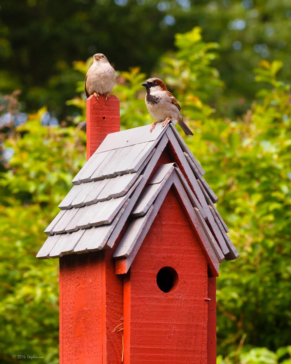 Mother and Baby Bird.jpg
