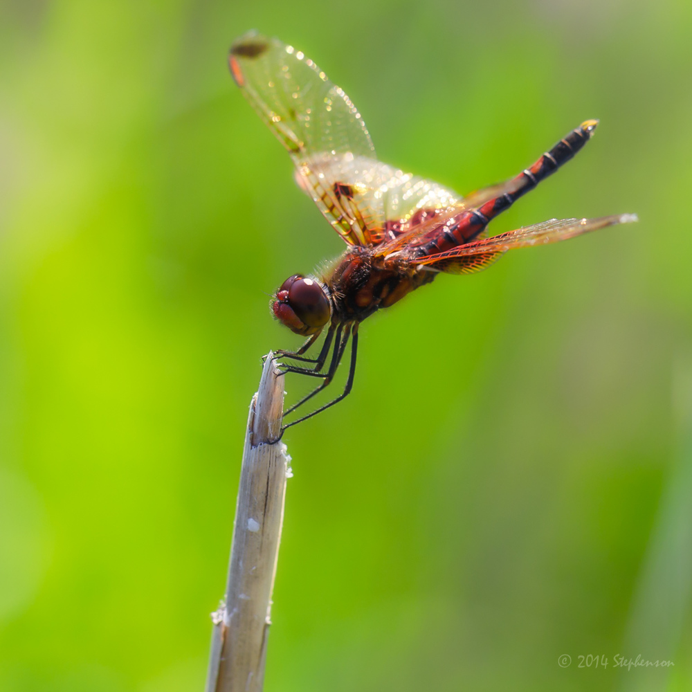 Dragonfly Safari-2.jpg